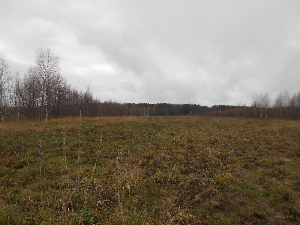 В Кимрском районе у собственника на земле незаконно росли березы и пырей ползучий