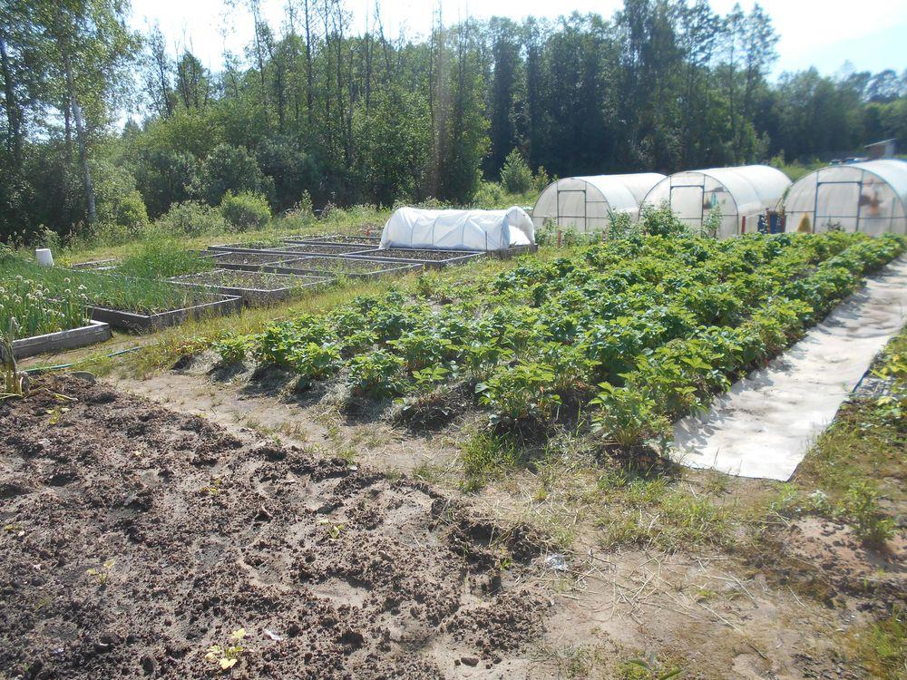 Собственник земли в Кимрском районе устранил нарушения и вместо свалки устроил огород